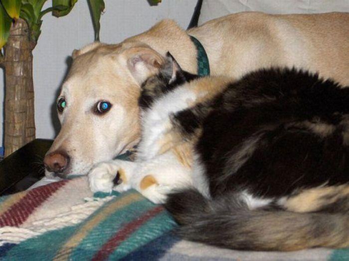 Дружба животных (16 фото)