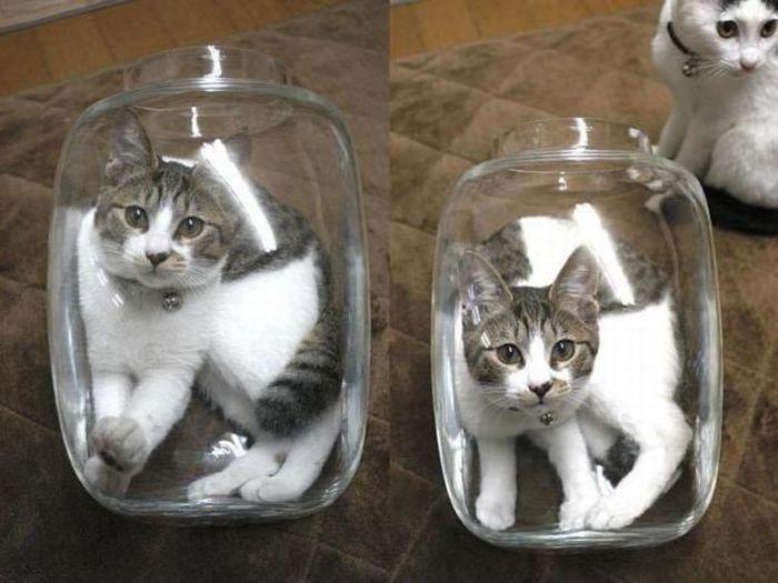 Завистливый кот (4 фото)
