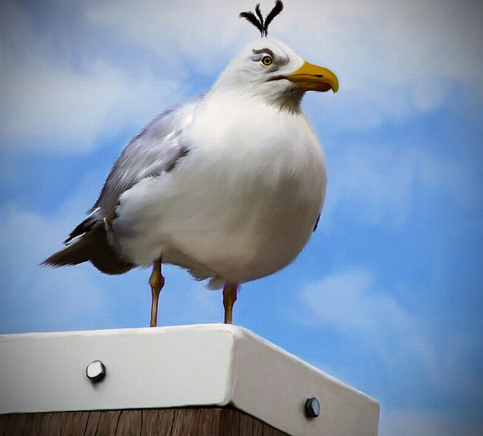 Angry Birds в реальной жизни (7 фото)
