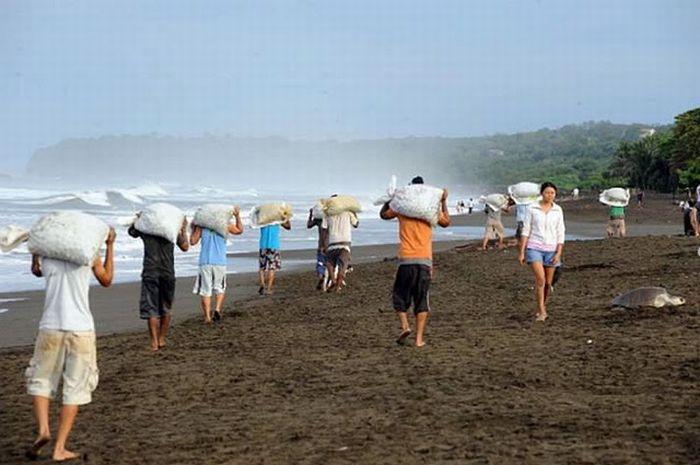 Браконьеры Коста-Рики (12 фото)