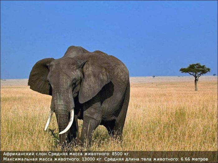 Огромные животные (10 фото)