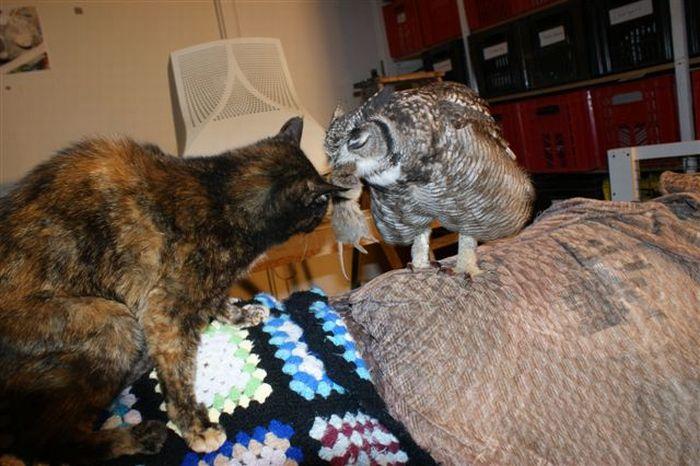 Заботливая сова (24 фото)