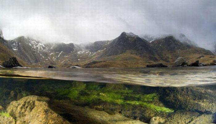 Лучшие фотографии дикой природы за 2011 год (33 фото)