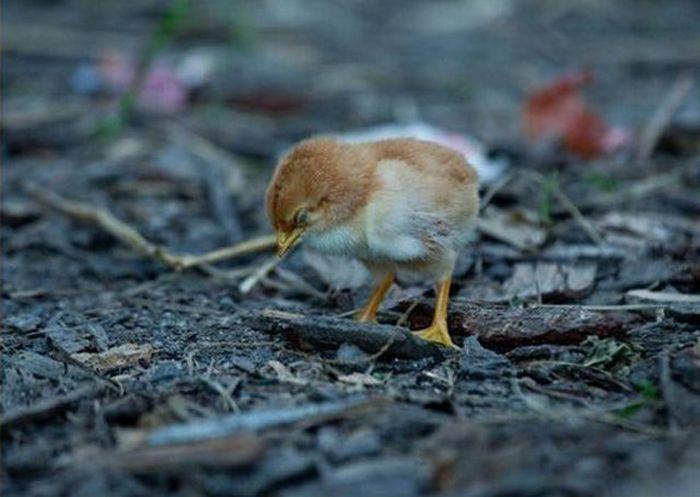 Беззащитный птенец (4 фото)