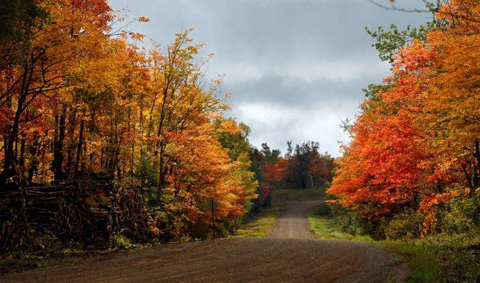 Осенние фотографии (39 фото)