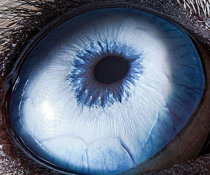 Глаза животных (15 фото)