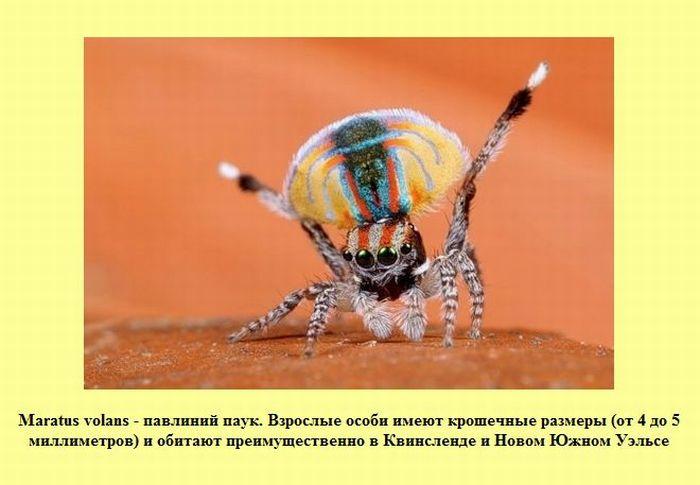 Интересные факты (30 картинок)