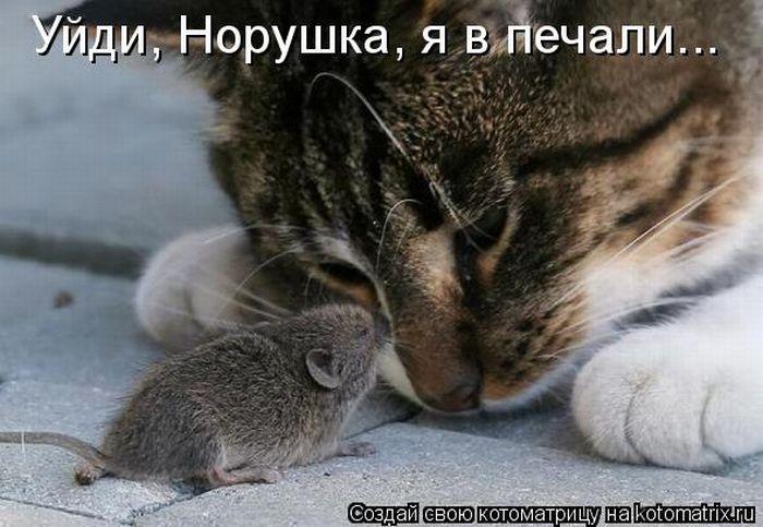http://cdn.trinixy.ru/pics4/20111014/kotomatrix_43.jpg