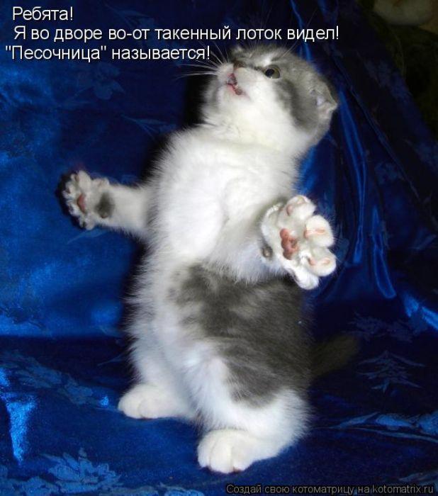 Открытки с котятам с надписями