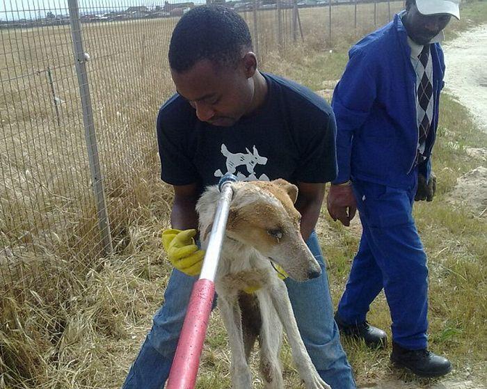 Собаку спасли от захоронения заживо (5 фото)