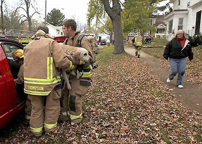Отважный пожарный спас собаку (5 фото)