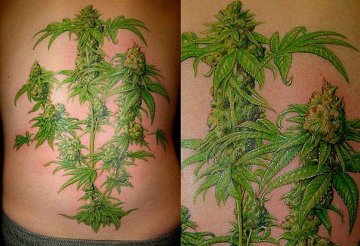 Лист конопли на попе гаага марихуана