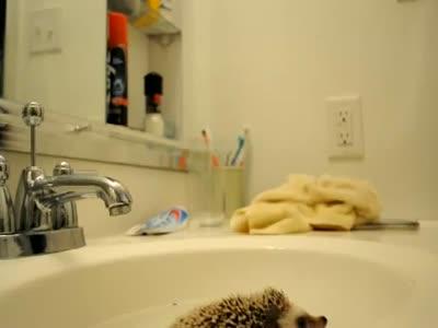 Как нужно мыть ежика с помощью зубной щетки