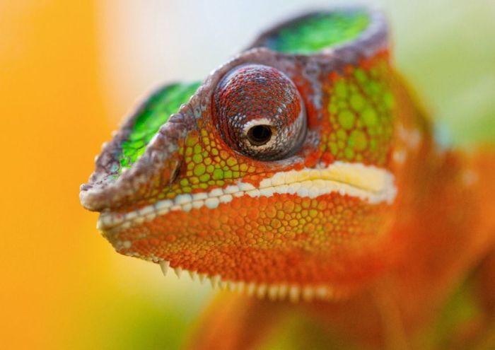 Удивительные фотографии животных (50 фото)