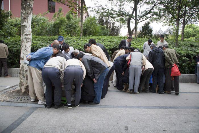 Бойцовские сверчки из Китая (22 фото)