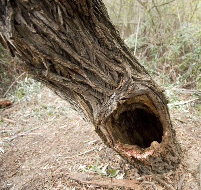 В плену у дерева (5 фото)