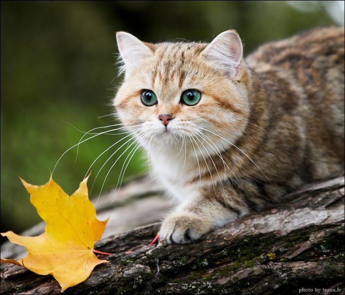 Осеннее настроение (8 фото)