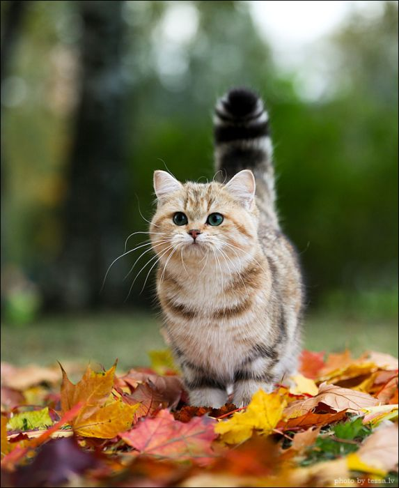 http://cdn.trinixy.ru/pics4/20111031/cat_06.jpg