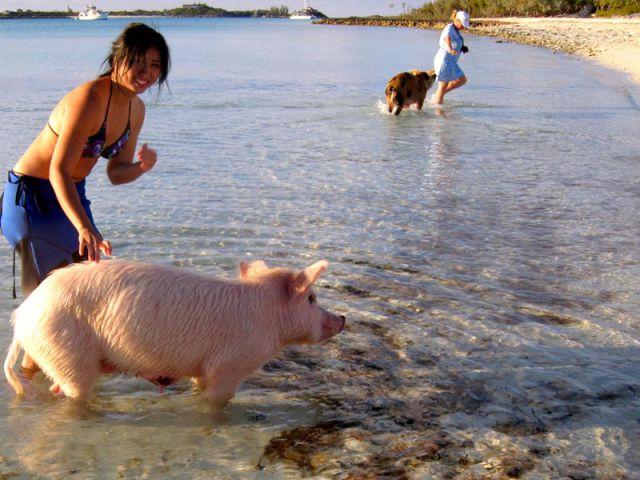Незабываемый отдых на Багамах (29 фото)