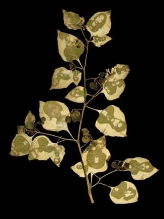 Фотографии на древесных листьях (14 фото)
