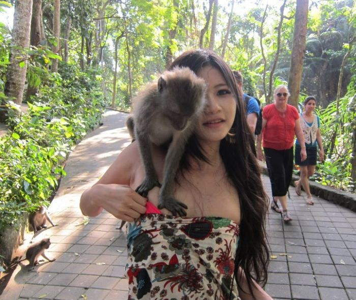 Развратные обезьянки (5 фото)