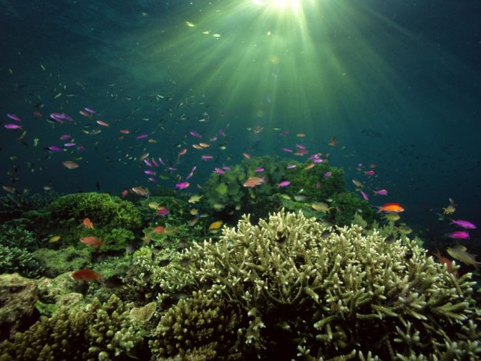 Красота подводного мира (100 фото)