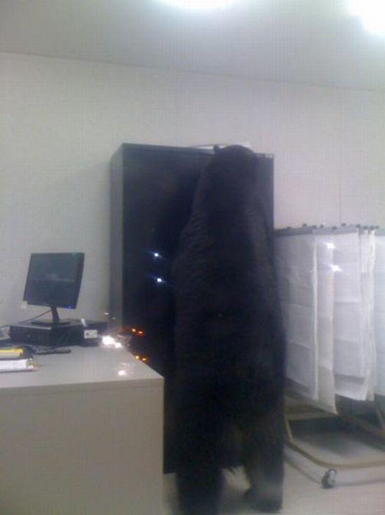 Странный работник в офисе (4 фото)