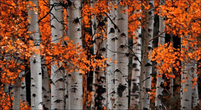 Самые красивые осени