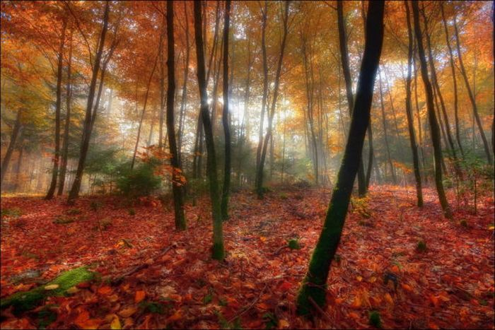 Красивая осень (44 фото)
