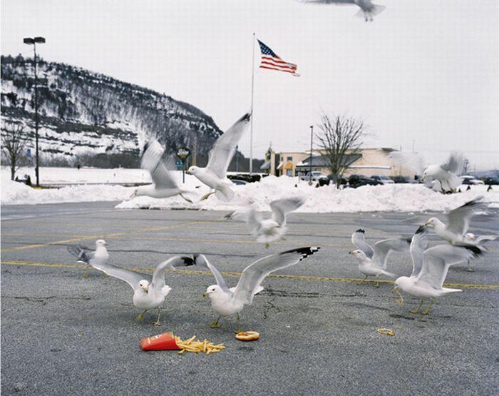 Животные на территории людей (25 фото)