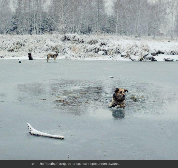 В ледяном плену (7 фото)