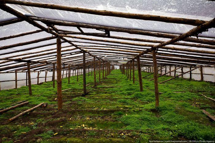 Огород по-китайски (36 фото)