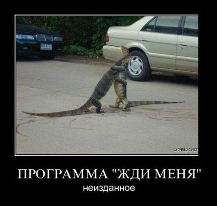 http://cdn.trinixy.ru/pics4/20111116/demotivatory_02.jpg