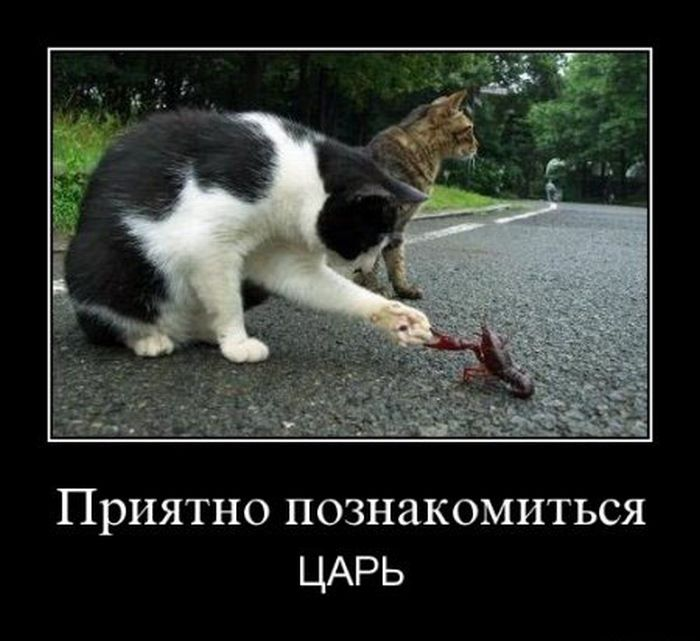 http://cdn.trinixy.ru/pics4/20111116/demotivatory_16.jpg