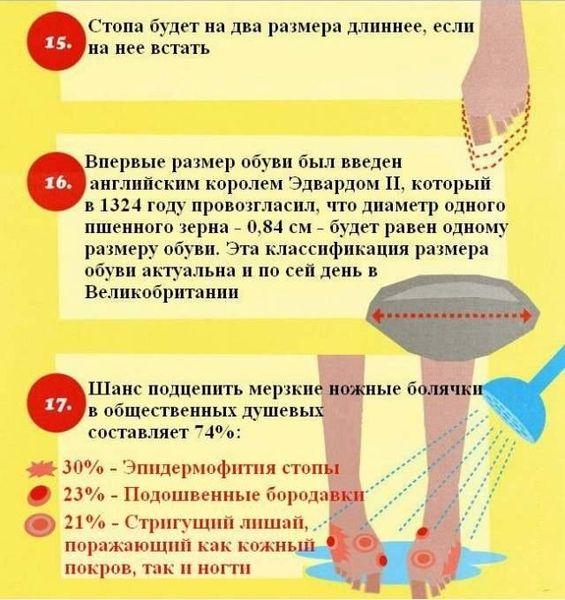 Интересные факты о ногах (6 картинок)