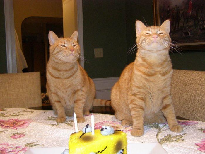 Кошачий день рождения (5 фото)
