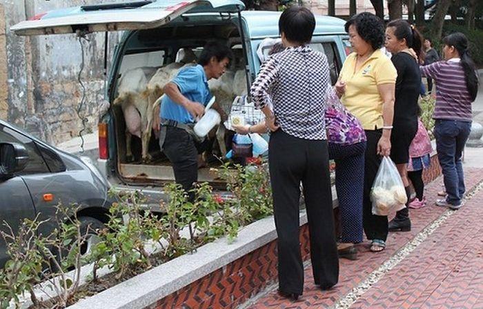 Как продают молоко в Китае? (3 фото)