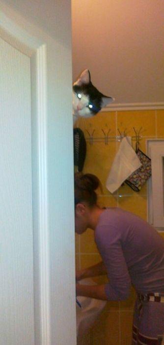 Коты хулиганят (67 фото)
