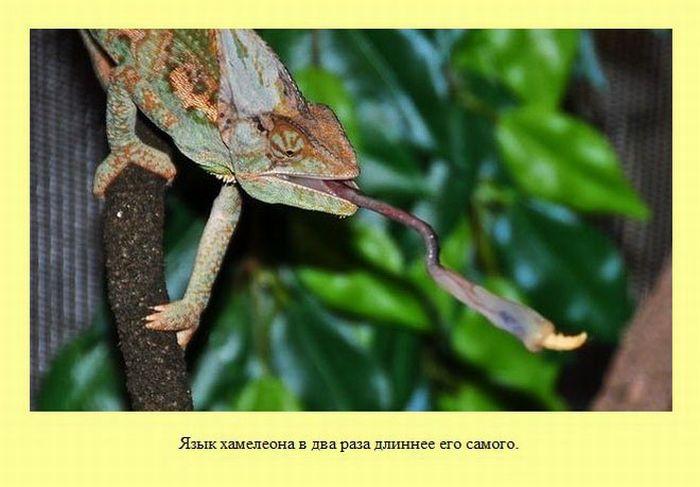 Интересные факты в картинках (37 фото)