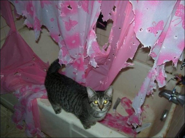 Кот в ванной (2 фото)