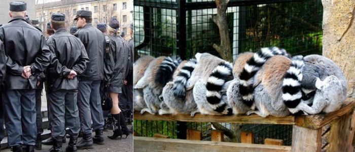 Люди и животные (22 фото)
