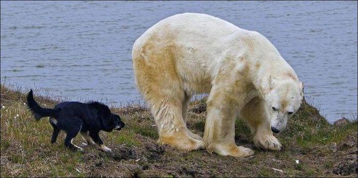 Сторожевые псы (5 фото)