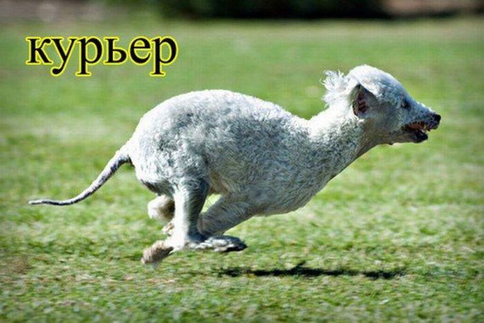 Животные и профессии людей (15 фото)