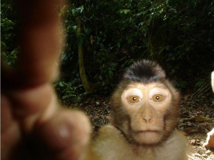Лучшие фотографии с камер-ловушек (25 фото)