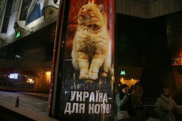 Маразмы в рекламе (44 фото)