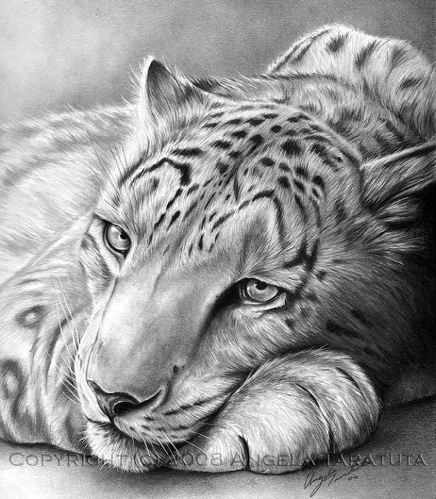 Рисунки карандашом (49 картинок)