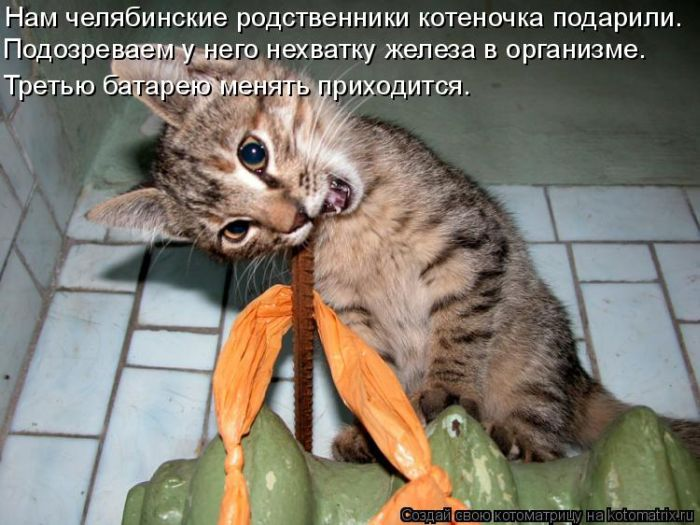 http://de.trinixy.ru/pics4/20111202/kotomatrix_50.jpg
