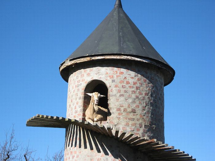 Башня для горных козлов (9 фото)