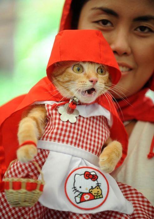 Лучшие фотографии животных за 2011 год (50 фото)