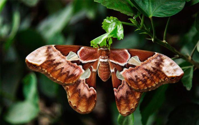Самые большие насекомые в мире 47 фото